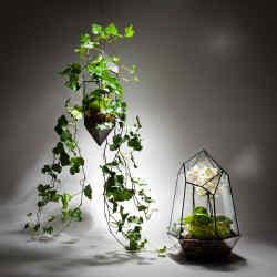 Jewelled Garden terrariums
