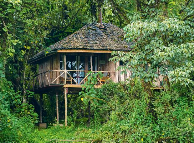 Treehouse accommodation at the remote Bale Mountain Lodge