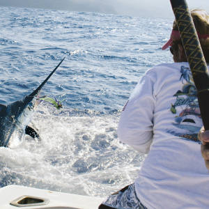 """A """"wire man"""" on the Balancal brings in a blue marlin that has taken a lure."""