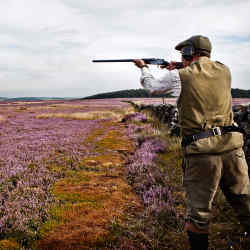Lord Masham shoots grouse on Ilton Moor, part of his Swinton Estate in North Yorkshire