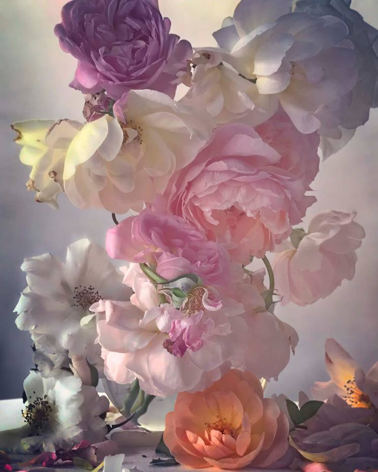 Celebrated fashion photographer Nick Knight has turned his lens on roses for an exhibition at Waddesdon Manor, opening on March 28