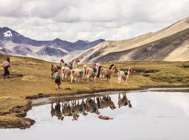 Llamas and their herders in the Ausangate range