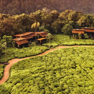 One & Only Nyungwe House is set on a working tea plantation at the edge of Rwanda's Nyungwe Forest