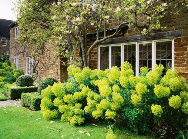 The front garden at Pettifers in Oxfordshire, featuring Euphorbia and Magnolia