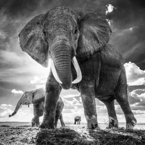 David Yarrow's dramatic image The Untouchables