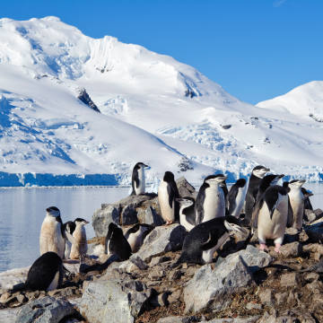 The expedition will offer encounters with animals such as chinstrap penguins
