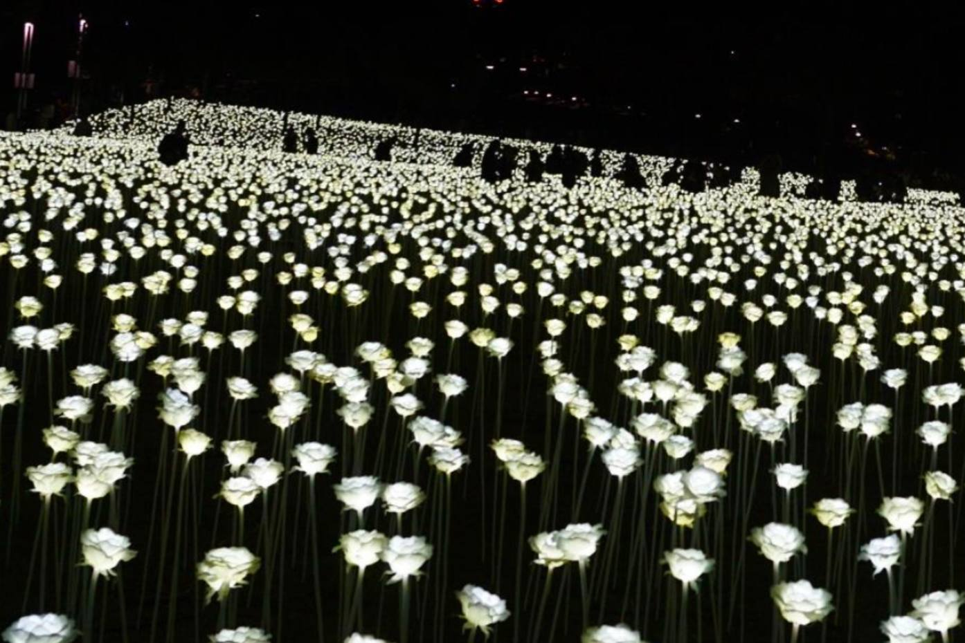 The Ever After Garden light installation in Mayfair features 27,000 illuminated white roses