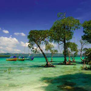Govindnagar Beach on Havelock Island, the Andamans.