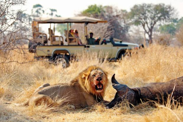 Thepursuit of big cats is ahighlight here