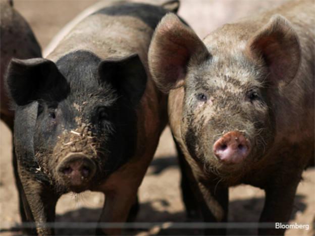African swine fever has global ramifications