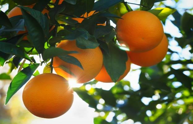 Non-citrus products driving growth at Treatt