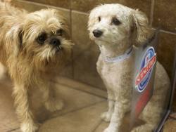 CVS and Animalcare benefit from lockdown pet boom