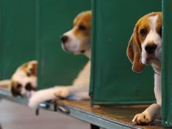 Animalcare boosted by higher margin sales mix