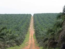 An agricultural commodity opportunity