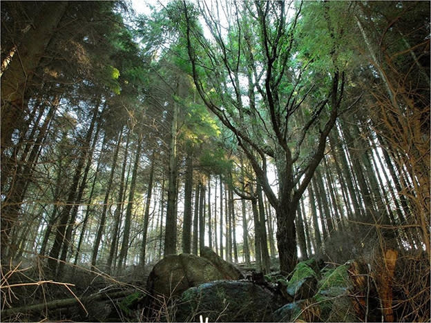 How woods can be tax-free