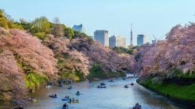 Article image: Finding Tokyo's hidden treasures