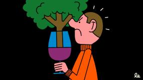 Article image: The decline of the oak barrel in winemaking