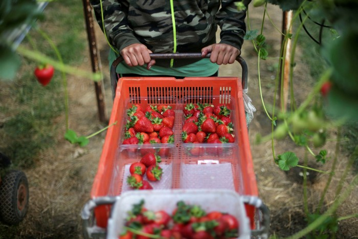 Government data suggest that prices paid to farms for strawberries barely rose between 2008 and 2018