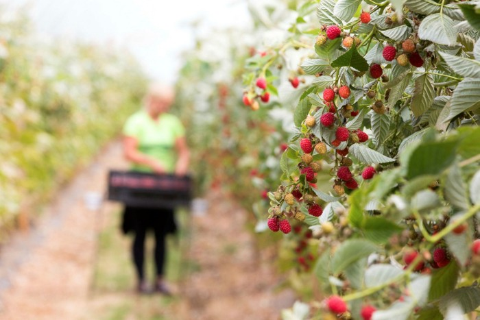 Research suggests UK farmers have intensified jobs in response to the rising minimum wage and pressure from supermarkets