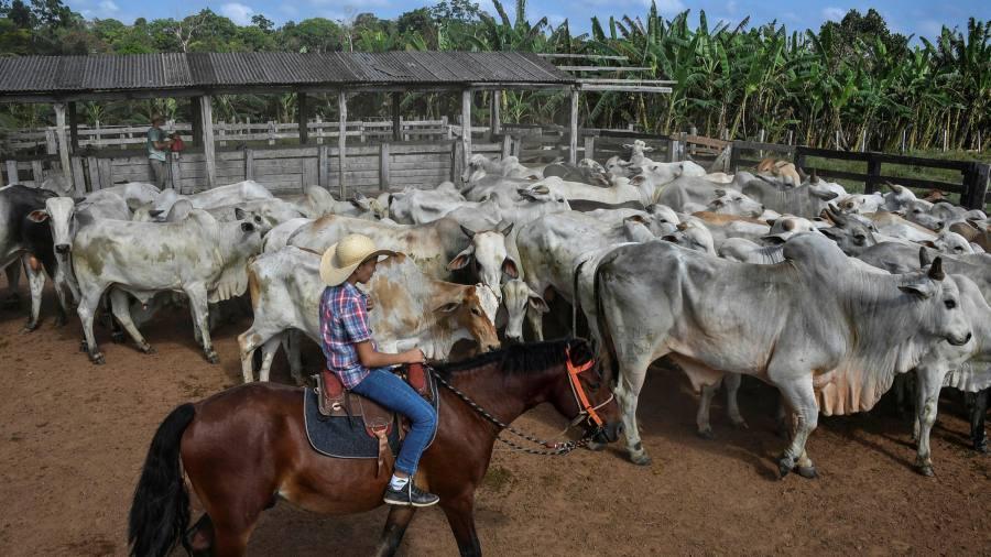 Brazil's plan to thwart 'cattle laundering'