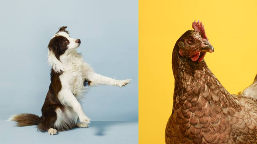 We love animals — so why do we treat them so badly?