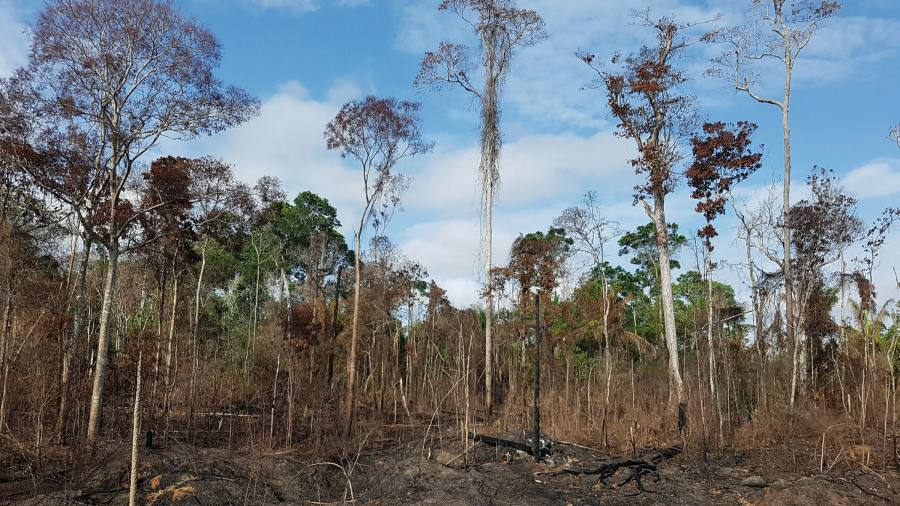 Drought puts Amazon at risk of 'large scale dieback', researchers warn