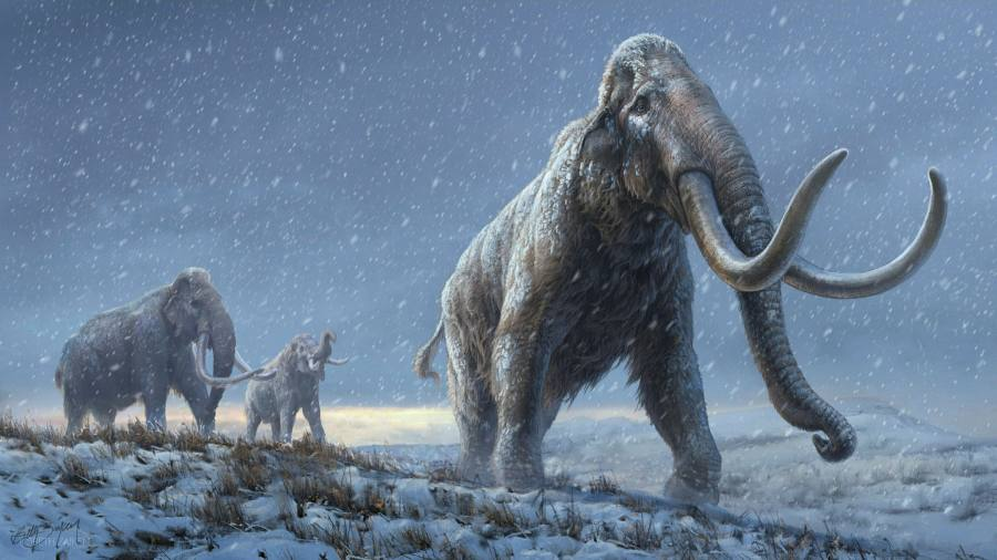 Scientists are extracting a million-year-old DNA from the remains of a Siberian mammoth